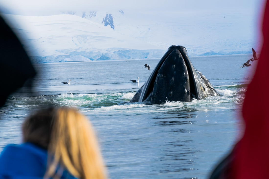 Humpback Whale sighting Antarctica