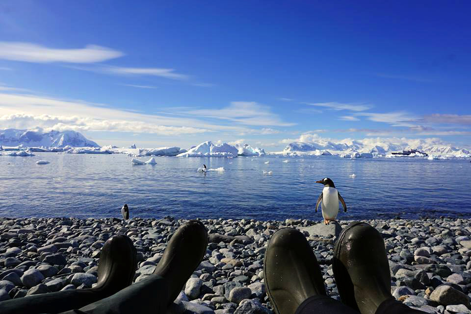 Two people sitting on gravel looking at penguins, sea and icebergs in Antarctica